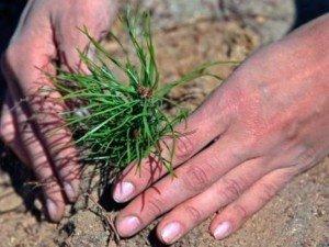 На Тячівщині візьмуться відновлювати ліс