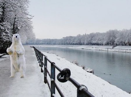 """Ужгородом """"розгулює"""" білий ведмідь (Фото)"""
