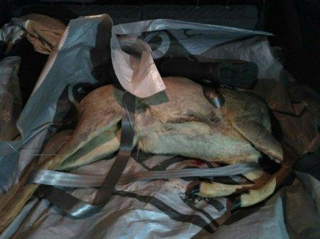 На Тячівщині затримали браконьєра з м'ясом вбитої косулі
