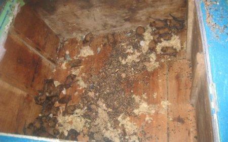 Запорожанка прихистила вдома 400 кажанів