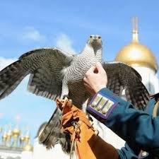 """Рідкісні птахи із Закарпаття ледь не стали """"нелегалами"""" (Відео)"""