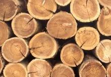 Закарпатським платникам про рентну плату за спеціальне використання лісових ресурсів у 2017 році