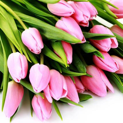 Дорогі жінки! Нехай у ваших родинах панують добробут, злагода та благополуччя - Владіслав Поляк