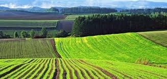 На Ужгородщині прокуратура вимагає повернути державі землю вартістю більше 25 млн грн