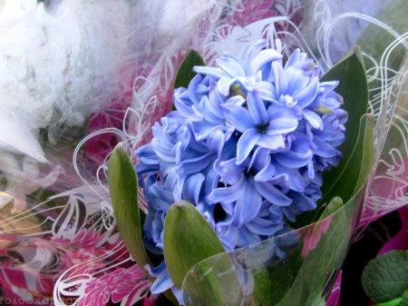 У Мукачеві набирають популярності весняні квіти в горщиках - ціни, асортимент