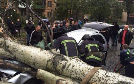 За вирізані тополі-вбивці в Іршаві роздмухують скандал