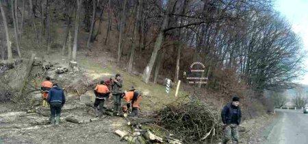 Уздовж дороги Перечинщини – чиститимуть ліс