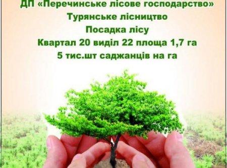 На Закарпатті всі охочі можуть взяти участи в акції «Майбутнє лісу в твоїх руках»