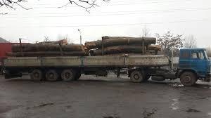 Жителі закарпатського села потерпають від нещадної вирубки лісів (Відео)