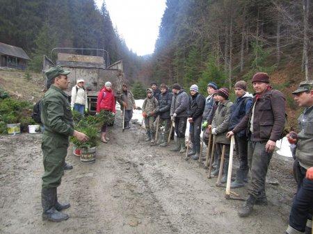На Рахівщині оновлюють ліс
