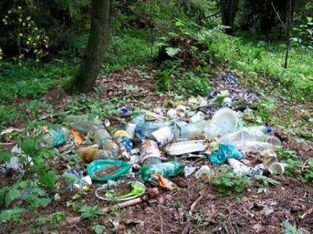 Ліс – не смітник