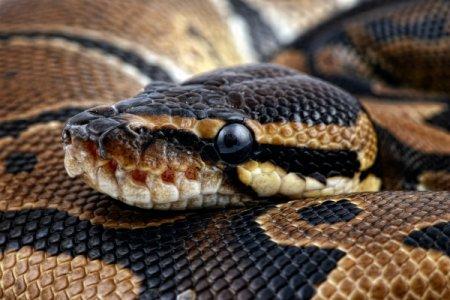 У США чоловіка оштрафували за прогулянку зі змією