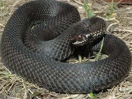 Обережно, в закарпатських лісах: змії!