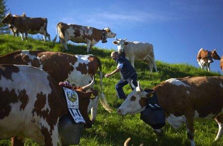 Закарпатці по безвізу ідуть в Швейцарію пасти корів