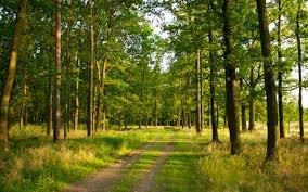 На Закарпатті в лісі знайшли безвісті зниклого хлопця