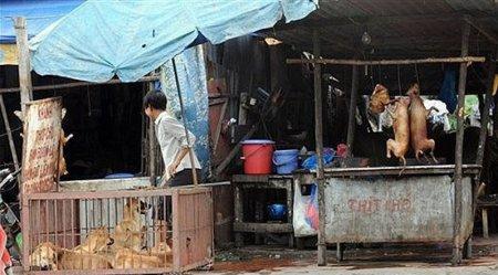 Закарпатець розповів про життя у В'єтнамі: «Собак спалюють живцем, так вони смачніші»