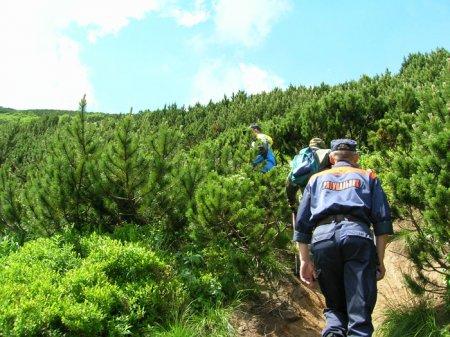 На Рахівщині туристка всю ніч просиділа на дереві, бо внизу ходили кабани