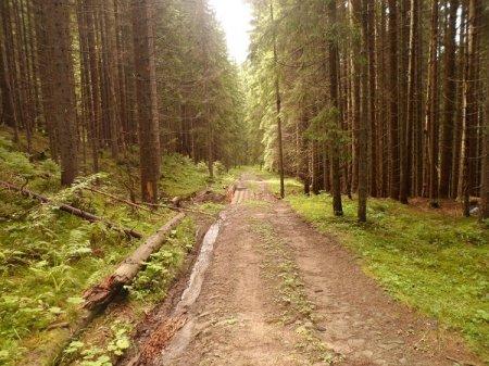 Нарешті завершується будівництво лісової дороги, що об'єднає два сусідні райони – Тячівський та Рахівський (ФОТО)