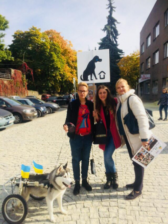 Марш за права безпритульних тварин пройшов в Ужгороді (фото)