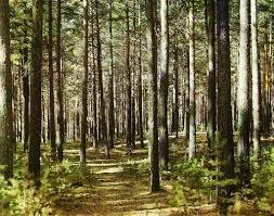 Москаль скасує через суд рішення обласної ради, якими узаконювалася крадіжка 350 гектарів лісу на Мукачівщині