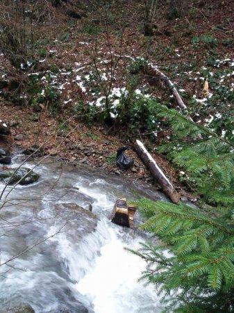 На Закарпатті браконьєри вбили бурого ведмедя та самку оленя (фото)