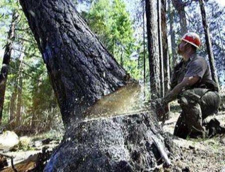 Зрубав дерево? Отримуй штраф в п'ять тисяч гривень!