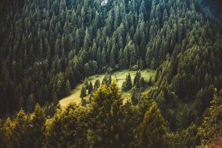 Ліси завжди були і залишаються головним ресурсом Закарпаття