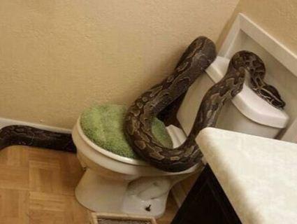 Франзуц ледь уникнув нападу змії з унітаза