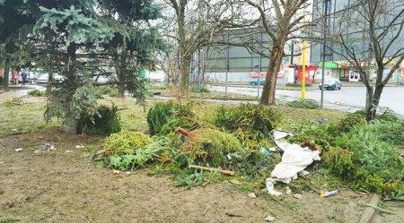 Закарпатський бізнес! Продавці ялинок покидали непроданий товар на вулицях Ужгорода