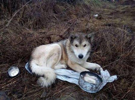 Не звірі, допоможемо: волонтери не залишиись осторонь та рятують собаку, яка потрапила під потяг(фото)