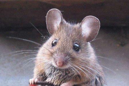 У Казахстані миші оселилися в банкоматі та згризли гроші