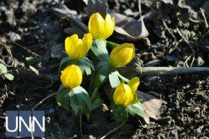 Диво природи: Попри мороз в Ужгороді цвітуть квіти (ФОТО)