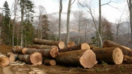 25-річний виноградівець самовільно вирубав 14 дерев породи «дуб», «граб», «черешня» та «липа»