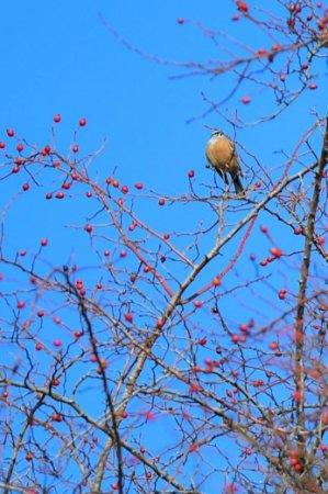 На Закарпатті з'явилися неймовірні пташки (фото)