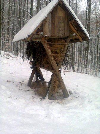 На Рахівщині в люті морози мисливці підгодовують диких тварин (фото)