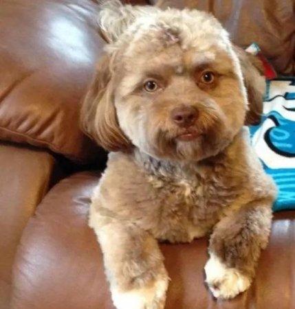 Пес з людським обличчям здивував користувачів Інтернет-мережі (фото)
