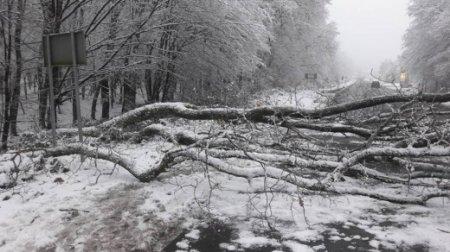 Через негоду на Закарпатті стався масштабний деревопад