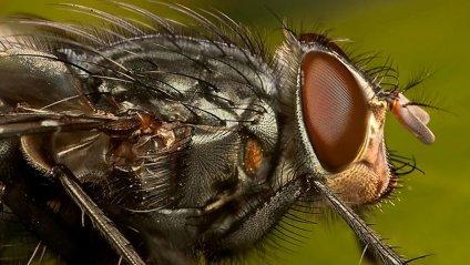 Вона є у кожному будинку: Ця комаха становить загрозу вашому життю