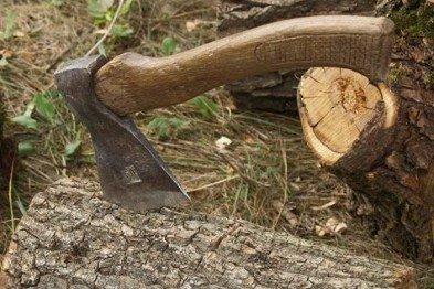 На Берегівщині чоловік незаконно порубав дерева собі на дрова