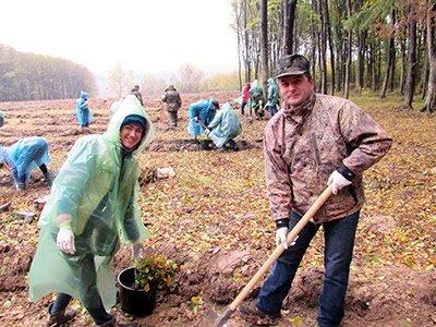 На Закарпатті масштабна акція з висадки лісу (ВІДЕО)