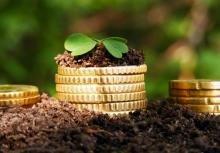 На Закарпатті природні ресурси поповнили бюджет на понад 31,8 млн грн