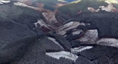 Катастрофа! Незаконна вирубка лісів Закарпаття сягнула критичної межі (фото)