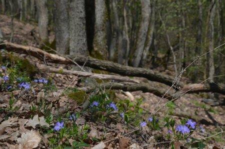 Проведено дослідження флори і рослинності заповідного масиву «Чорна гора»
