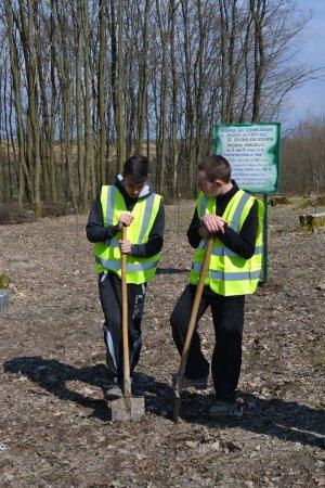 На Берегівщині садили дерева в рамках акції «Майбутнє лісу в твоїх руках»