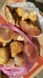 На Закарпатті вже продають перші білі гриби