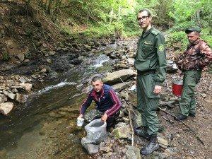 У гірські річки на Закарпатті запустили 12 тисяч мальків форелі (ФОТО)