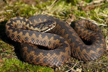 На Прикарпатті троє дітей злягли в реаніамацію через укуси змій