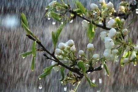 Чому 8 травня не можна проливати воду на землю: народні прикмети