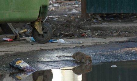 Жахлива смерть пенсіонерки: Тіло згризли щурі