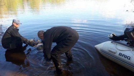 Страшна знахідка: на Виноградівщині в руслі р. Гаспарка виявили тіло людини